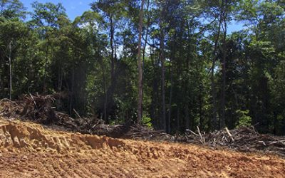 Using carbon markets to tackle climate change and protect forests