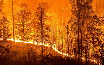 Wildfires of the future