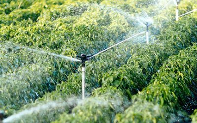 Improving efficiency to meet agricultural water demand